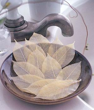 soap leaves las terrenas live les feuilles de savon. Black Bedroom Furniture Sets. Home Design Ideas