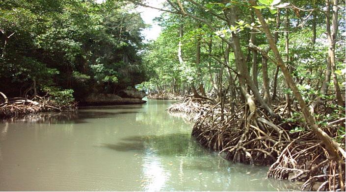 dans - Environnement ! mangrove-parc-los-haitises-rep-dom