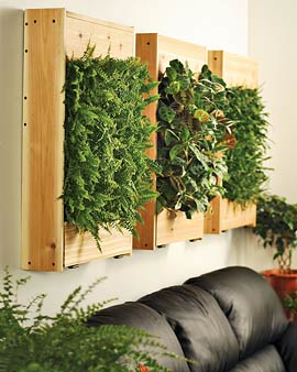 Plante d int rieur murale las terrenas live ajoutez for Decoration murale plante